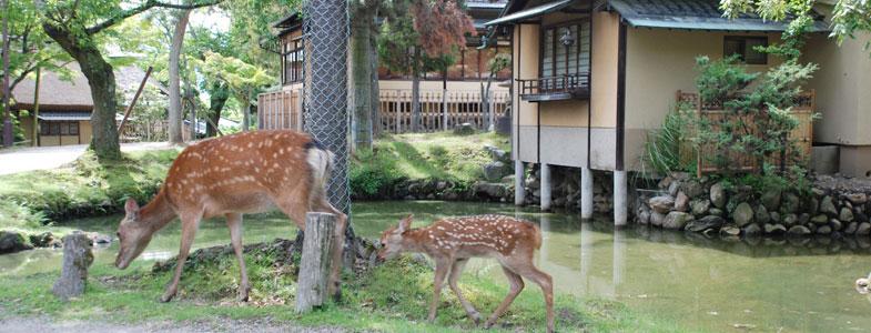 客室の横を歩く鹿の親子