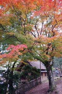 紅葉と客室